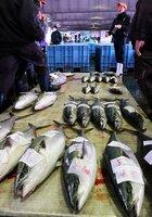 寒ブリやサワラなどが並んだ初競り(京都府舞鶴市上安久・府漁業協同組合舞鶴地方卸売市場)