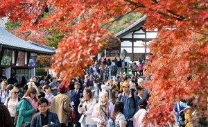 紅葉見物の観光客でにぎわう天龍寺(16日午前11時57分、京都市右京区)