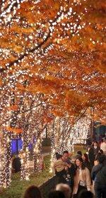 木々を彩るイルミネーションを楽しむ人たち(22日午後5時50分、京都市右京区・ローム本社周辺)