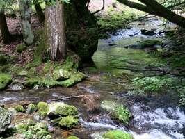 京都大芦生研究林内の由良川の源流(南丹市美山町芦生)