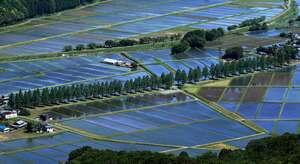 青空を映す水田に、若葉を広げたメタセコイアの並木道が延びる(滋賀県高島市マキノ町)