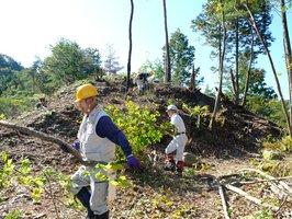 木を伐採して埴生城跡を整備する住民たち(京都府南丹市)