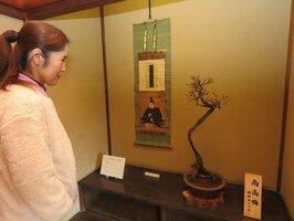 菅原道真を描いた掛け軸とともに展示されている大阪天満宮の盆梅(長浜市港町・慶雲館)