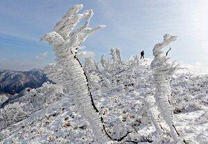 山頂付近の吹きさらしの尾根にできた「エビのしっぽ」と呼ばれる霧氷(東近江市甲津畑町)