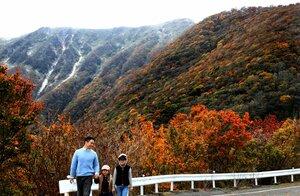 山の斜面が赤や黄色に色づいた伊吹山(岐阜県揖斐川町から米原市の山頂方面を望む)