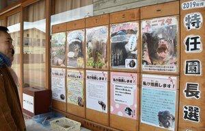 「特任園長選挙」に立候補した動物たちを紹介する掲示板(京都市左京区・市動物園)