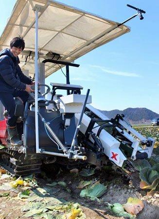 AIを使ってキャベツを認識し、自動収穫する装置の実証実験(滋賀県彦根市日夏町)