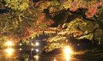ライトに照らされ暗闇に浮かび上がる紅葉(14日午後6時10分、京都市左京区・府立植物園)