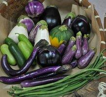 カラフル野菜の一部