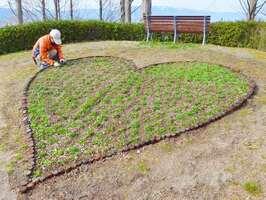 四つ葉が出現しやすい品種のクローバーが植えられたハート型の花壇(草津市下物町・水生植物公園みずの森)