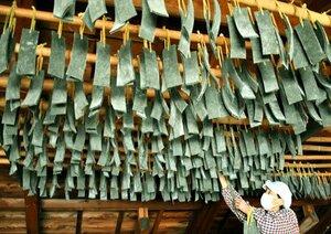 民家の屋根裏につるされ乾燥中の「へんごさ餅」(京都府宮津市田原)