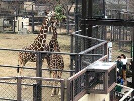 飼育係の解説を聞きながら、キリンの「ランチ」を観察する家族連れ(京都市左京区・市動物園)