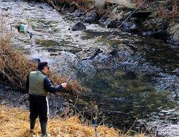 橋の上からバケツで放流されるアマゴ(左奥)と、下流で糸を垂らす釣り人=京都府和束町湯船・和束川