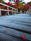 霜降る冷え込み、今季一番 川沿いで紅葉と共演
