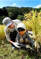 鎌を使って丁寧に稲を刈る親子(京都府亀岡市畑野町)