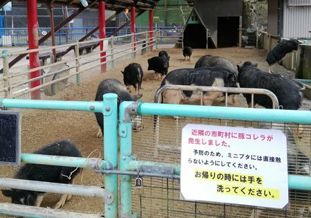 施錠され、注意喚起の看板が取り付けられたミニブタとの触れ合いスペース(京都府福知山市猪崎・市動物園)