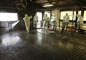 殺処分後の豚舎内を清掃する県職員(東近江市内)=滋賀県提供