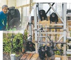 野生に近い環境で生活できるようにに工夫された京大熊本サンクチュアリ。左上は、京大霊長類研究所で暮らすアイと松沢教授=コラージュ