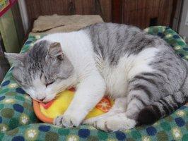 店先のベンチに置かれたベッドで眠るハスキー