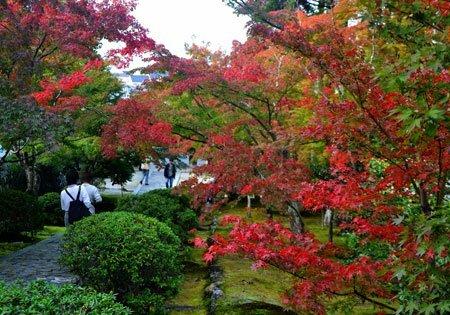 紅葉シーズンもにぎわった一休寺の境内(2018年11月08日、京都府京田辺市)