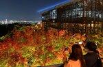 試験点灯で鮮やかに浮かび上がった清水寺の紅葉(15日午後7時11分、京都市東山区)