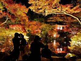 色づいた木々がライトアップされ幻想的な雰囲気の境内(25日午後7時24分、京都市伏見区・醍醐寺)