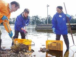 レーキやスコップで堆積したカキ殻を回収する参加者たち(京都府宮津市文珠)