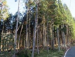 日本の林業は大きな転換点を迎えている(京都府南丹市美山町)