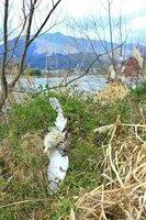 糸に絡まった状態で発見されたトラフズク(京都市右京区)=22日、田子さん撮影